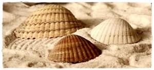 Muschel-im-Sand