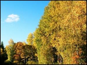 Wald-Landschaft